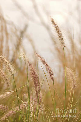 Photograph - Simply Grass by Vicki Ferrari