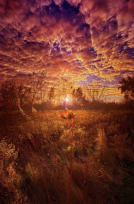 Photograph - Simply Made by Phil Koch