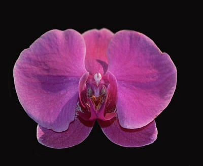 Mixed Media - Simply Orchids by Dennis Buckman