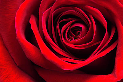 Photograph - Simply A Red Rose by Cindi Ressler