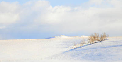 Photograph - Simply Snow Landscape by Theresa Tahara