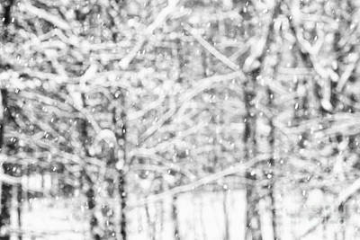 Photograph - Simply Snowing by Sue OConnor