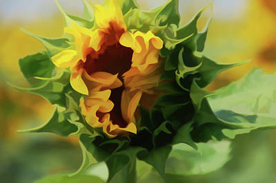 Photograph - Simply Soft Elegant Sunflower by Aimee L Maher Photography and Art Visit ALMGallerydotcom