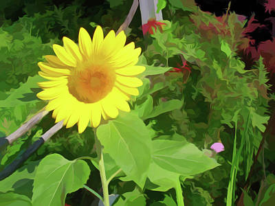 Floral Photograph - Simply Soft Garden Sunflower by Aimee L Maher Photography and Art Visit ALMGallerydotcom