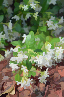 Photograph - Simply Soft Jasmine In Bloom by Aimee L Maher Photography and Art Visit ALMGallerydotcom