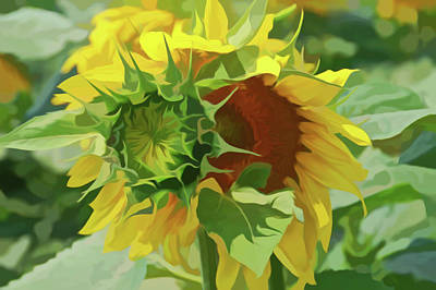 Photograph - Simply Soft Joyous Sunflower by Aimee L Maher Photography and Art Visit ALMGallerydotcom