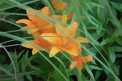 Photograph - Simply Soft Orange Tiger Lilies by Aimee L Maher Photography and Art Visit ALMGallerydotcom