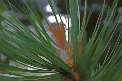 Photograph - Simply Soft Pine Needles by Aimee L Maher Photography and Art Visit ALMGallerydotcom