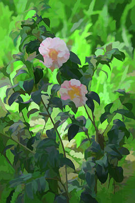 Photograph - Simply Soft Pink And White Camellias by Aimee L Maher Photography and Art Visit ALMGallerydotcom