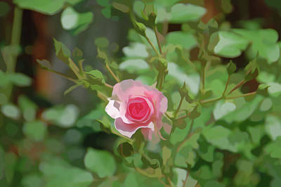 Photograph - Simply Soft Pink Rose by Aimee L Maher Photography and Art Visit ALMGallerydotcom