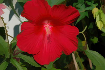 Photograph - Simply Soft Red Hibiscus by Aimee L Maher Photography and Art Visit ALMGallerydotcom