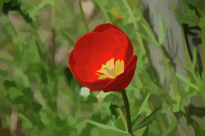 Photograph - Simply Soft Red Tulip by Aimee L Maher Photography and Art Visit ALMGallerydotcom