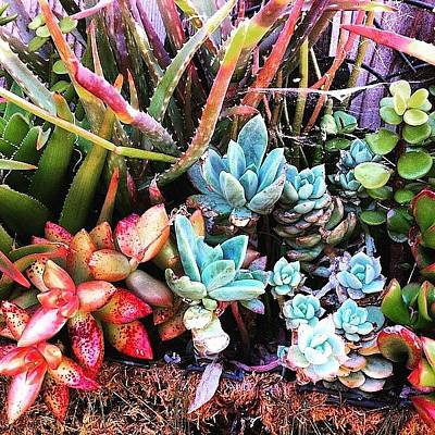 Photograph - Simply Succulents by Angela Holmes