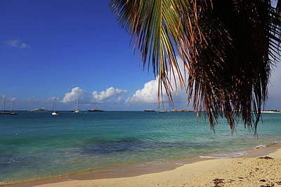 Sint Maarten Photograph - Simpson Bay Palm Tree Caribbean St Martin by Toby McGuire