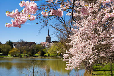Photograph - Sindelfingen Germany Pink Spring Blossoms by Matthias Hauser
