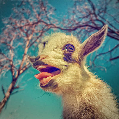 Goat Photograph - Sing It Again by TC Morgan