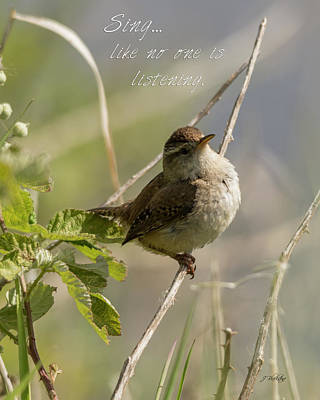 Photograph - Sing - Warbler Art by Jordan Blackstone