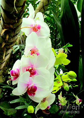 Photograph - Singapore Orchid 1 by Randall Weidner
