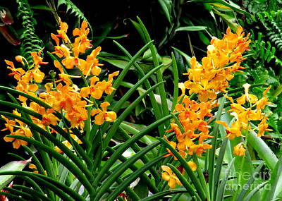 Photograph - Singapore Orchid 4 by Randall Weidner