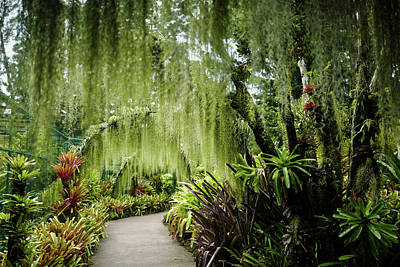 Photograph - Singapore Orchid Garden by Jocelyn Kahawai