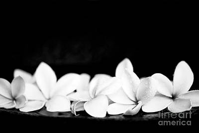 Photograph - Singapore White Plumeria Flowers The Fragrance Of Hawaii by Sharon Mau