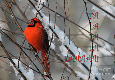 Photograph - Singing Cardinal Christmas Card by Lois Bryan
