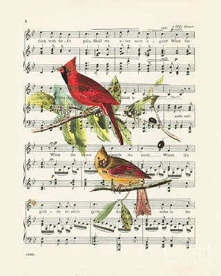 Birds Royalty-Free and Rights-Managed Images - SInging cardinals by Delphimages Photo Creations