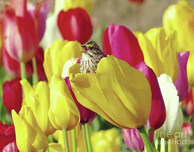 Photograph - Singing In Tulips by Irina Hays