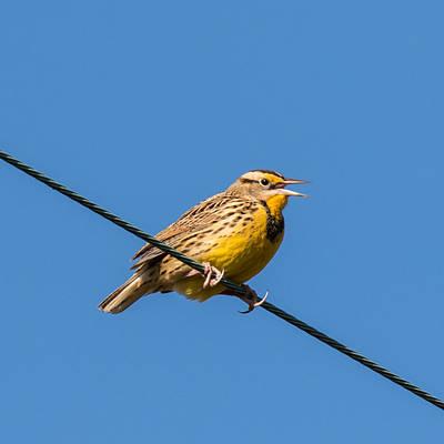 Meadowlark Wall Art - Photograph - Singing On The Wire by Jurgen Lorenzen