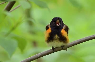 Photograph - Singing Sweetly by Ann Bridges