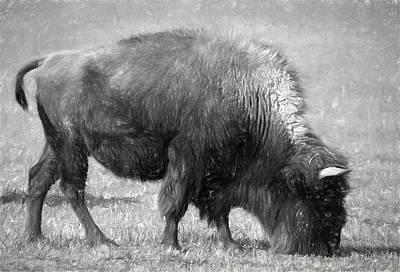 Single American Bison Original by Linda Phelps