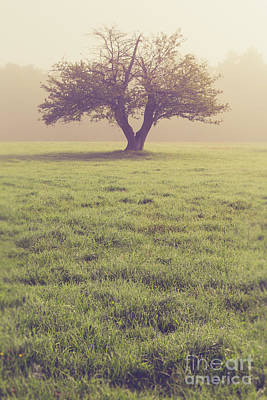 Photograph - Single Apple Tree In The Fog by Edward Fielding