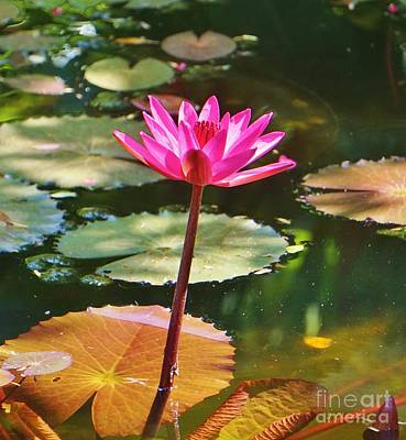 Lilies Royalty-Free and Rights-Managed Images - Single Bloom by John Clark
