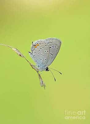 Photograph - Single Blue Beauty by Debbie Green