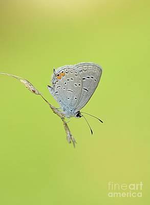 Photograph - Single Blue Beauty by Debbie Green