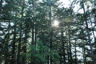 Photograph - Single Branch Foreground Forest View by Matt Harang