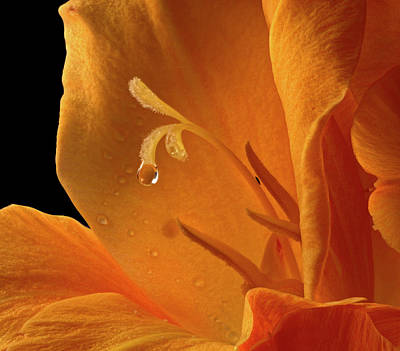 Canna Photograph - Single Drop by Jean Noren