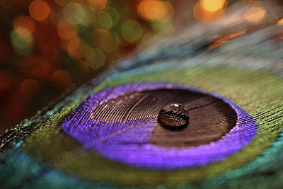 Photograph - Single Drop On Peacock Feather by Lilia D