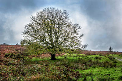 Photograph - Single Exmoor Tree by David Hare