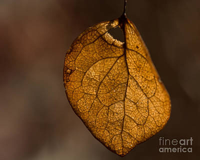 Photograph - Single Fall Leaf by Alissa Beth Photography