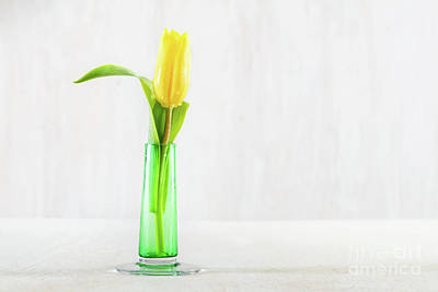 Photograph - Single Fresh Tulip In A Glass Vase On A Wooden Table. by Michal Bednarek