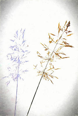 Digital Art - Single Grass Plant And Shadow. by Rusty R Smith