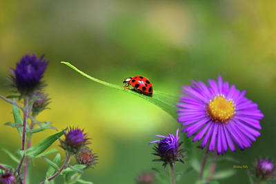 Lady Bug Photograph - Single In Search by Christina Rollo
