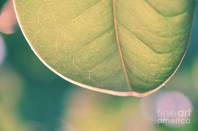 Photograph - Single Leaf by Andrea Anderegg