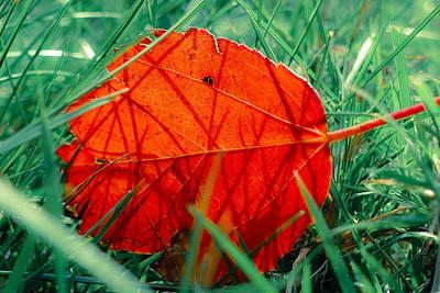 Photograph - Single Leaf by Laurel Powell