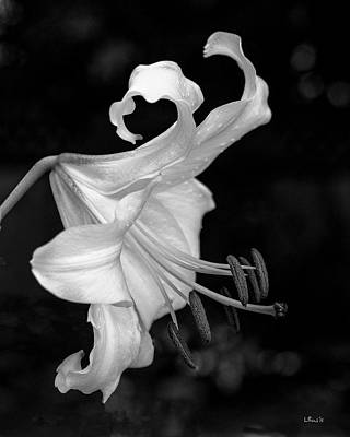 Photograph - Single Lily In Black And White. by Bill Linn