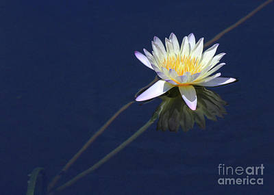 Photograph - Single Lotus by Paula Guttilla