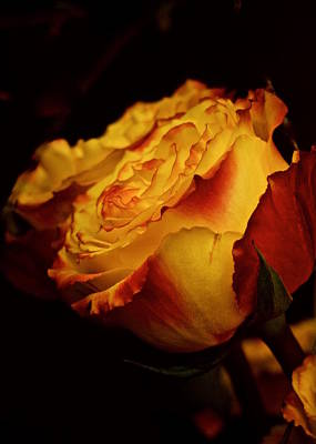 Art Print featuring the photograph Single March Vintage Rose by Richard Cummings