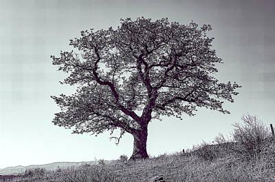 Antlers - Single Oak Tree by Jay Billings