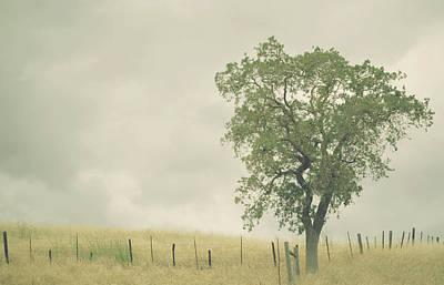 Overcast Photograph - Single Oak Tree by Pamela N. Martin